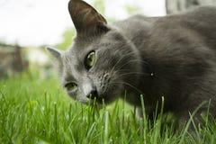 En kattstående Royaltyfri Fotografi