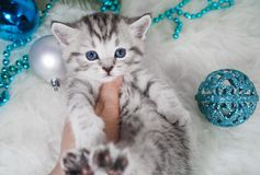 En kattunge är i handen för person` s Kattunge Royaltyfria Bilder