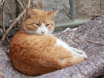 En kattunge arkivbild