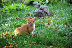 En kattunge in i gräset Arkivbild