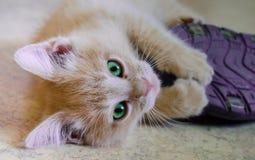 En kattunge med en häftklammermatare Arkivfoton