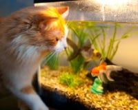 En kattunge med guldfisken Fotografering för Bildbyråer