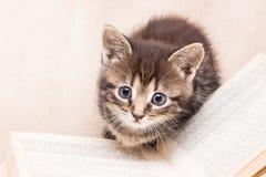 En kattunge nära en öppen bok Handbok av jägaren och fisherman_ fotografering för bildbyråer