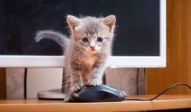 En kattunge nära en dator Kattunge med en datormus Arbetsintelligens Fotografering för Bildbyråer