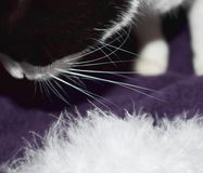 En kattunge som spelar i vita fjädrar Royaltyfri Bild