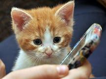 En kattunge som spelar med en mobiltelefon Arkivfoton