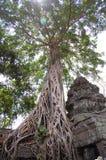 En khmerAngkor tempel (Prasat Ta Prohm) på Siem Reap Cambodja Royaltyfria Bilder