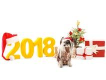 En kines som krönas i en santa hatt, är nära landskapet för ` s för det nya året isolerat Arkivfoto