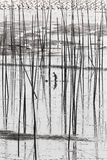 En kinesisk fisher som fiskar intertidal zon Arkivfoton