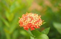 En klunga av blommor royaltyfria foton