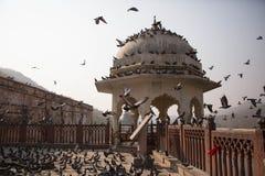 En klunga av fåglar framme av det bärnstensfärgade fortet Arkivbilder