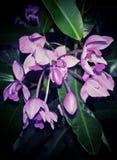 En klunga av juvel-tonade orkidér arkivfoton