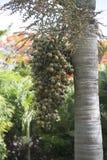 En klunga av Palm data Royaltyfri Foto