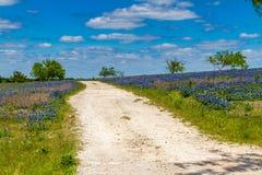 En knaprig härlig sikt av en ensamma lantliga Texas Road i en stora Texas Field Blanketed med den berömda Texas Bluebonnets. Arkivbilder