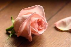 En knopp av en rosa färgros Royaltyfria Foton