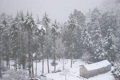 En koja och Deodar träd som täckas av insnöat tungt snöfall i en indisk Himalayan by, Uttarakhand arkivbilder