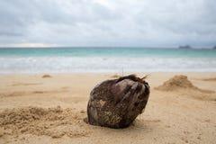 En kokosnöt på en tropisk strand Arkivfoto