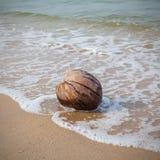En kokosnöt som sköljas upp på stranden på en tropisk strand Arkivfoton