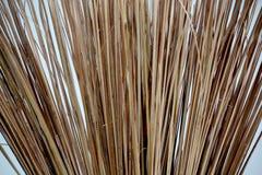 En kokospalmen Royalty-vrije Stock Afbeelding