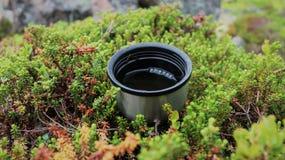 En kopp av ett varmt te royaltyfri foto