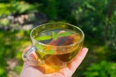 En kopp av mintkaramellte med mintkaramellsidor fotografering för bildbyråer