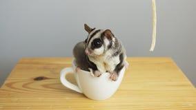 En kopp av sugarglider arkivbild