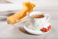 En kopp te med fallande höstsidor av lönn och en grupp av rönnen Royaltyfri Foto