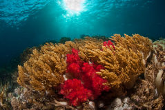 En korallhavsscape, Indonesien Arkivbilder