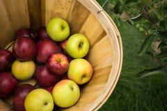 En korg av mångfärgade äpplen Arkivfoton