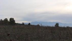 En kort video från monteringen Kozhu i sydvästlig Bulgarien lager videofilmer