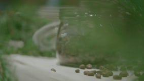 En kotte på en sörja Barrträd grön kotte på cederträ lager videofilmer