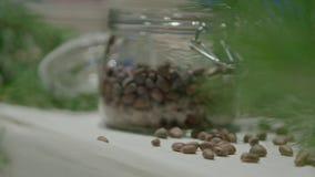 En kotte på en sörja Barrträd grön kotte på cederträ stock video