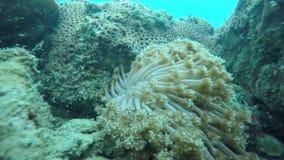 En krabba i ett hav stock video