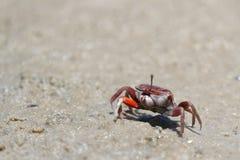 En krabba på stranden royaltyfria foton