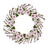 En krans av rosa körsbärsröda blomningar och ljust - gröna sidor tillsammans med unga pilfilialer på en vit bakgrund Naturlig run royaltyfri illustrationer