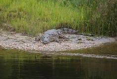 En krokodil på Victoria sjön royaltyfri fotografi