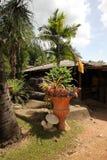 En kruka med tropiska blommor och med papegojor och med gräs och träd och stenar runt om detta i Nong Nooch det tropiska botanisk Royaltyfri Foto