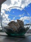 En krus mycket av havssniglar royaltyfria foton