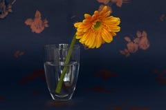 En krysantemum i ett exponeringsglas Arkivbilder
