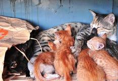En kull av kattungar Arkivfoton