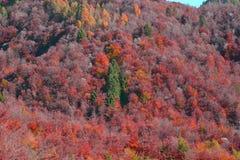 en kulle av höstfärger arkivbilder