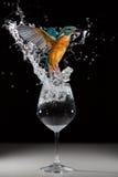En kungsfiskare som tar av från ett exponeringsglas med ett rov Arkivfoton