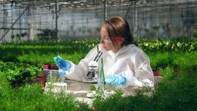 En kvinna arbetar med ett mikroskop och pincett i ett växthus stock video