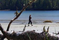 En kvinna går på en sandig strand som inramas av filialerna av ett stupat träd Royaltyfri Fotografi