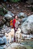 En kvinna g?r med tv? Caucasian herdehundkappl?pning i skogen royaltyfri foto