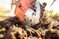 En kvinna gräver en trädgård med en skyffel Fotografering för Bildbyråer