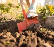 En kvinna gräver en trädgård med en skyffel Royaltyfri Fotografi