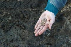 En kvinna i hennes hand rymmer fröt, innan han planterar i jordningen, att plantera för närbild arkivbilder