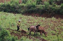 En kvinna i rött fält Fotografering för Bildbyråer