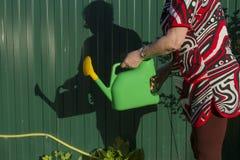 En kvinna med en bevattna can bär vatten in i en grönsakträdgård Tid som bevattnar växterna Royaltyfri Bild